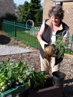 Janet planting in the community garden